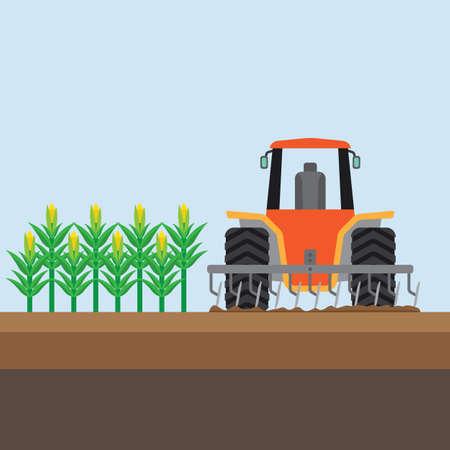 field crop: farming corn
