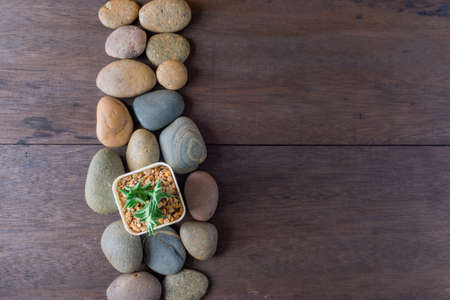 small beautiful cactus and rock in the wooden background