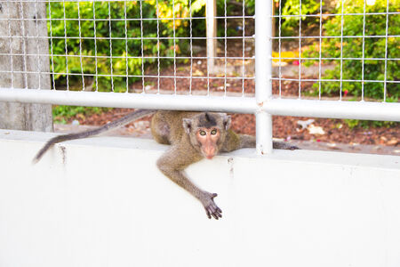 Monkey go under the Cage and see you. photo