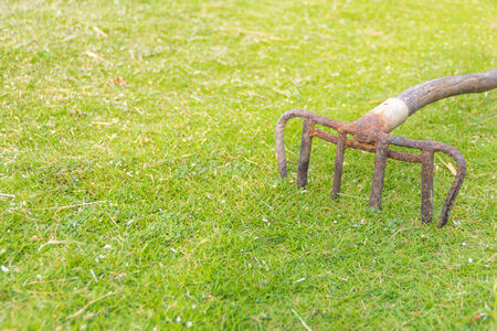 Old rake on the green grass photo