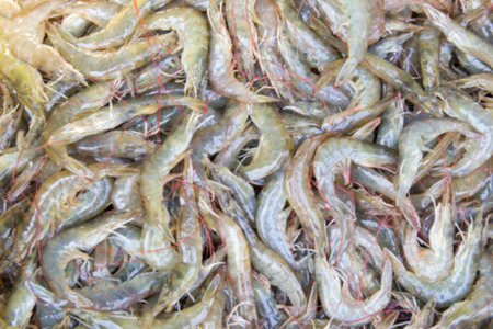 abstract food: Blured background fresh shrimps at seafood market Thailand Stock Photo