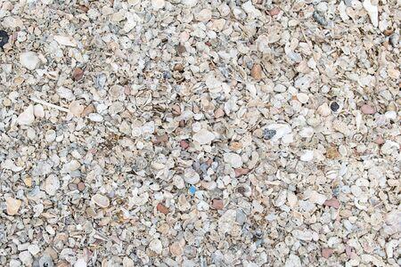Texture Shells on floor near the beach (Soft tone)