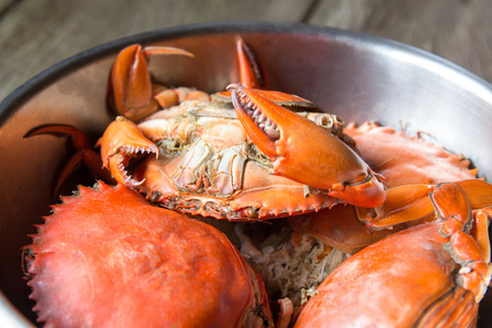 maryland: Steamed Sea Crabs Stock Photo