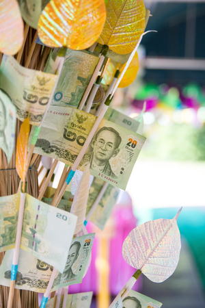 Banknotes Thai Baht put in color bamboo stick on the money tree for donate for the Katin festival in Thailand, people make merit by giving money for the temple by money tree.