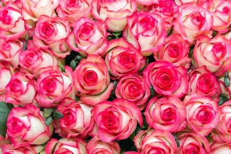 Witte rozen met roze randen en groene bladeren