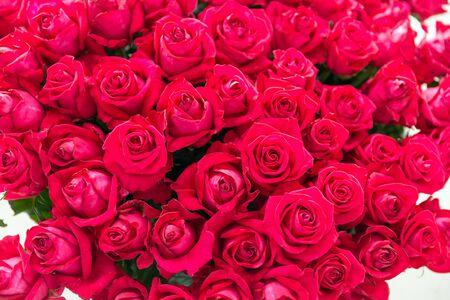 Strakke bos rode rozen met groene bladeren