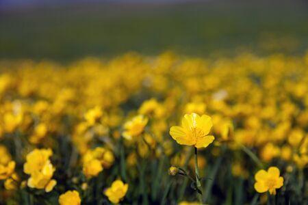 Gele bloem onder de achtergrond wazig veld bloemen Stockfoto