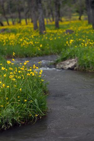 Rivier die door gele bloemen en groen bos stromen