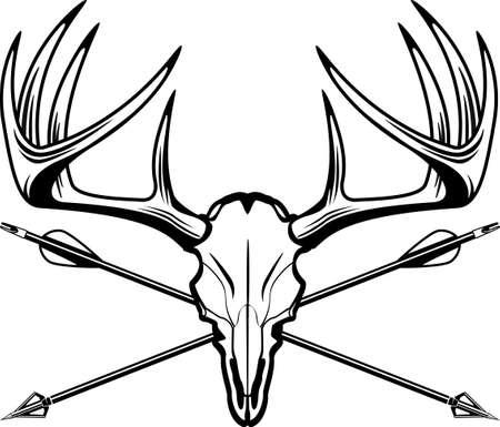 hunting trophy deer buck skull with hunting arrows