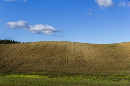 Plowed field on a clear hill. photo