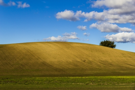 Plowed field on a clear hill with tree. photo