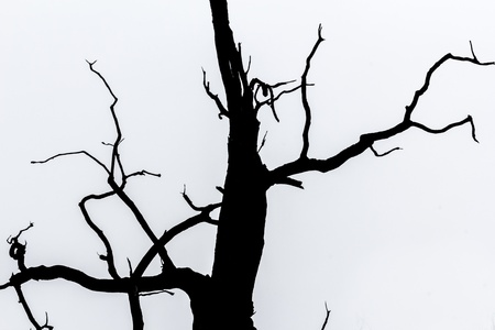 broad leaf: black and white  silhouette of tree detail-view