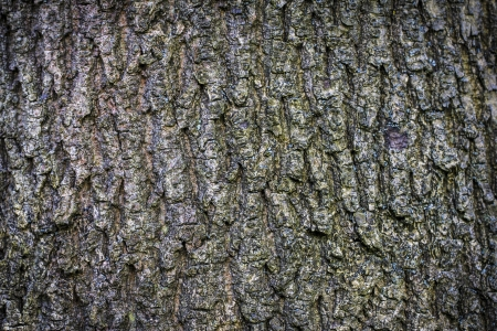 closeup of old bark background. Stock Photo - 21591915
