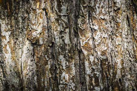 closeup of old bark background. Stock Photo - 21591965