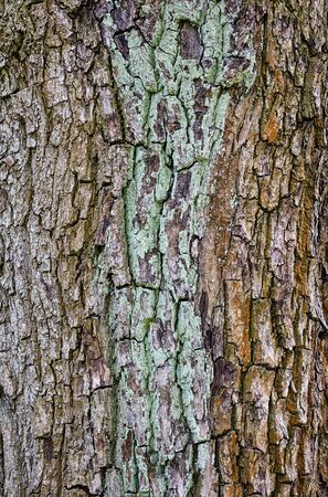 closeup of old bark background. Stock Photo - 21591966