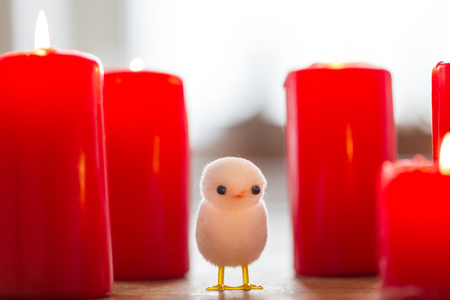 poppet: little white chicken between big red candles.