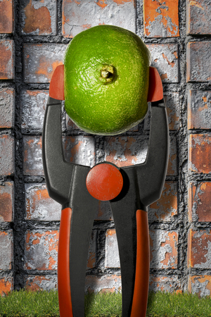 composition: to squeeze the orange dry, with euro sign in the middle. Reklamní fotografie