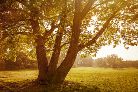 lit image: back lit image of an autumn tree