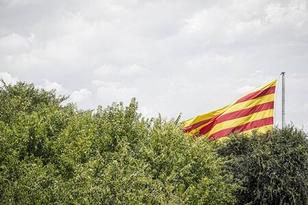 spanish flag: spanish flag behind some trees in summer