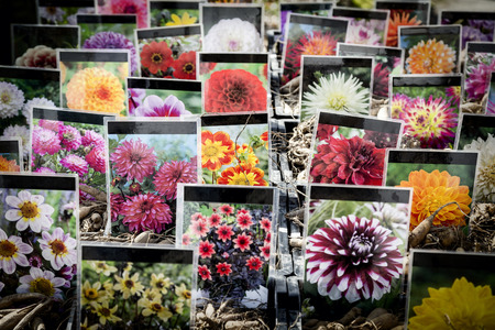 garten: Flower stall at botanischer Garten, botany garden. Every year in springtime there is a big flower market. Stock Photo