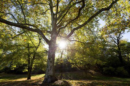 huge tree: wide angle shot of a huge tree with sun