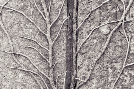 tendrils: tendrils growing on a granite stone for backgrounds