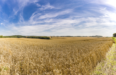 harvest organic: HDR panorama of a wheat field and dramatic sky