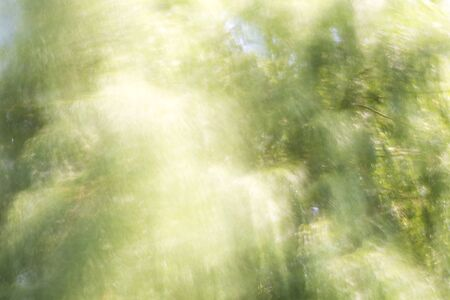 sparse: blurred background with tree and light