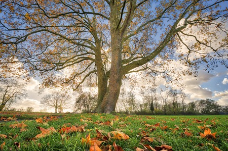 beautiful tree with autumn leaves Stok Fotoğraf