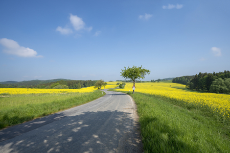 landscape with curved street leading through rape fields