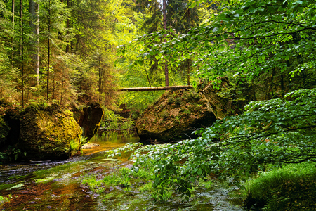 little creek in a deep forrest with big rocks