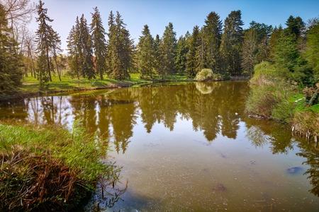 mirroring conifers in a river