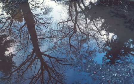 Reflection of a tree in a puddle for backgrounds 写真素材