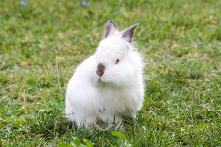 Weißes Kaninchen Standard-Bild