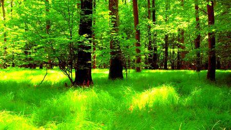 Ein Wald im Frühling, eine schöne natürliche und ruhige Szene Standard-Bild