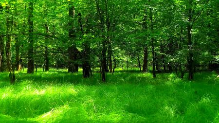 Photo of the dark of a forest during a sunny day Stockfoto