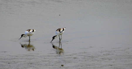 Photo of two black and white Herons which are fishing
