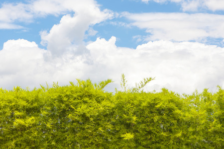 ivy wall: Walls, trees and blue sky in the daytime  Illustration for background Stock Photo