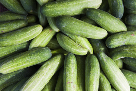 resh green cucumber on local market macro photo