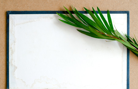 composition of the blank cardboard card with leaves photo