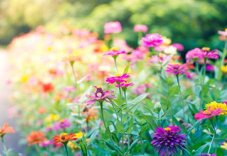 prachtige tuin bloemen in vintage stijl