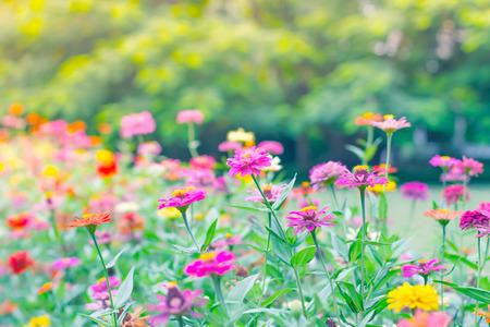 beautiful garden flowers in vintage style