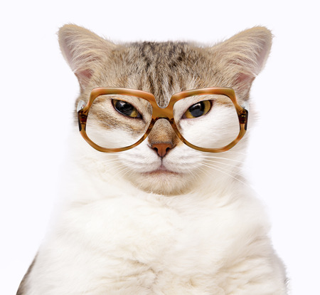 pet  animal: portrait of cat with glasses isolated on white Stock Photo