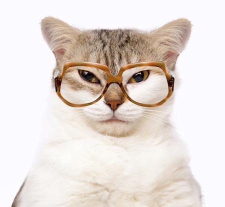 portret van kat met een bril op wit wordt geïsoleerd