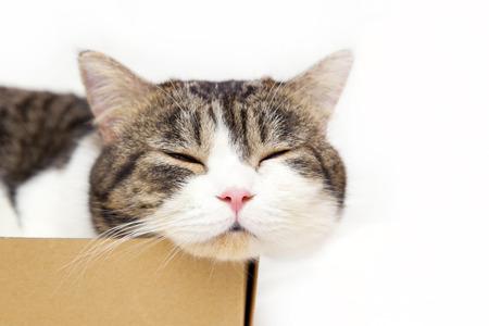 huiskat slapen in doos op witte achtergrond Stockfoto