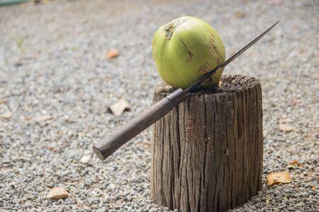 cut: cut coconut