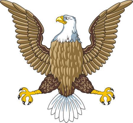 eagle flying: American bald eagle