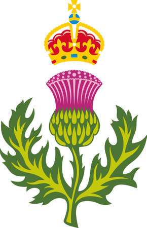 thistles: Scottish thistle  Badge of Scotland  Stock Photo