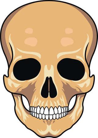 aggresive: Skull