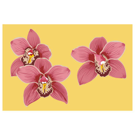 thai orchid: Orchid